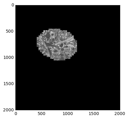 Sample electron microscopy image from stack